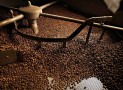 La torrefaction du café